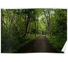 Summer Forest Tranquility - Beautiful Charlevoix, Quebec, Canada Poster