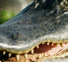 Laughing Gator Sticker
