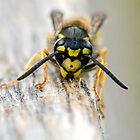 Wasp by Paul Spear