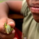 Pet Skink - Pohnpei, Micronesia by Alex Zuccarelli