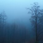 Forest Fog - San Bernardino, California by Alex Zuccarelli