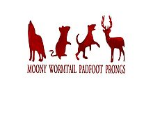 Moony, Wormtail, Padfoot and Prongs Photographic Print