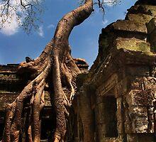 Ta Prohm Strangler Fig - Ta Prohm, Cambodia by Alex Zuccarelli