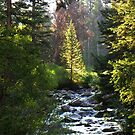 East Inlet Trail - Rocky Mtn National Park by Bernie Garland