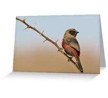 Blackcheeked Waxbill - Finding Thorny Solitude Greeting Card