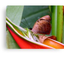 Butterfly Eating Dinner Canvas Print