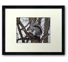 Squirel in a Tree Framed Print