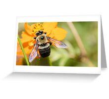 Bee 5 Greeting Card