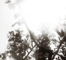 Apple Tree Sunburst Sticker