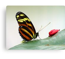 Black, Orange, and Yellow Butterfly Canvas Print