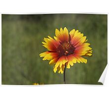 Yellow red flower Poster