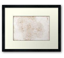 Whispers Of Dahlias  Framed Print