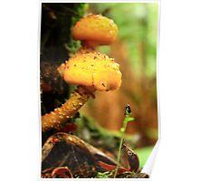 Fungus at Black River far nor west Tasmania , Australia Poster
