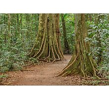 Rainforest Mary Cairncross park Photographic Print