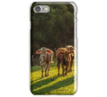 Cattle at Sunset iPhone Case/Skin