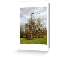 Birch Trees in Autumn Greeting Card