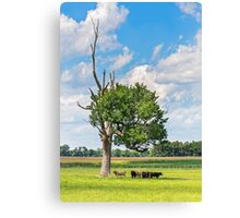 Cows in the Shade Canvas Print