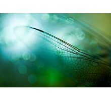 Emerald Damselfly  Photographic Print