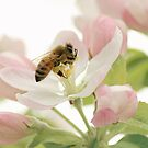 Bee on a Pink Blossom by Tamara Brandy