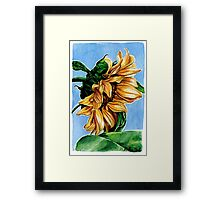 Sunflower Watercolor Painting Framed Print