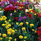 The Glory of Spring by sandysartstudio