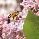 Busy Bee by Tamara Brandy