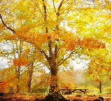 Fall Glory, Ellenor Lawrence Park, VA by Bine
