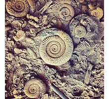 Ammonite Fossils Photographic Print