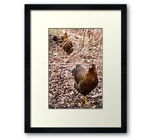 Chooks in the Raspberry Patch Framed Print