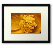 Flower Center Framed Print