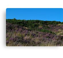 Purple Heather Covering Hednesford Hills Canvas Print