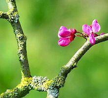 Pink Zen by Taryn East