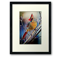 Little Miss Cardinal Framed Print