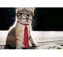 Cat in office Photographic Print