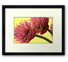 Two Chive Blossoms Framed Print