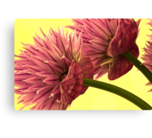 Two Chive Blossoms Canvas Print