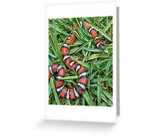 Coastal mountain king snake Greeting Card