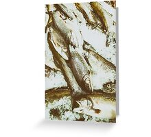 Cold Sea Fish For Sale In Fish Market Greeting Card