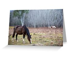 Highway Horses Greeting Card