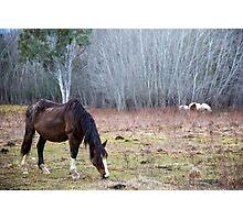 Highway Horses Photographic Print