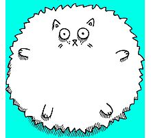 Fluff Ball Cat Photographic Print