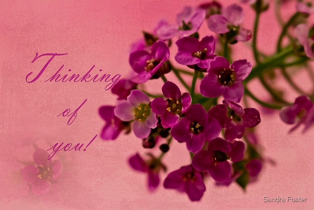 Thinking Of You Card - Alyssum by Sandra Foster