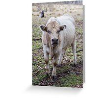 Bellowing Bull Greeting Card