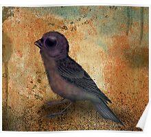 Weird Bird is the word Poster