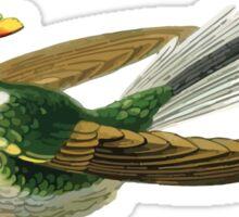 Exotic Rainforest Bird Sticker