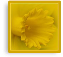 Cancer Council Of Australia - Daffodil Day Canvas Print