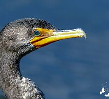 Cormorant Profile by TJ Baccari Photography