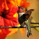 AUTUMN ANNA'S HUMMINGBIRD... by RoseMarie747