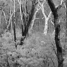 Bushland by Geoff Smith