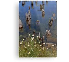 Old Pilings Fayette State Park 1 Metal Print